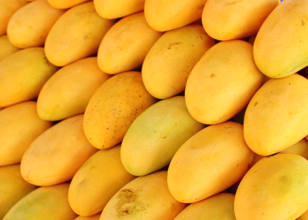 buy mango juice online in india